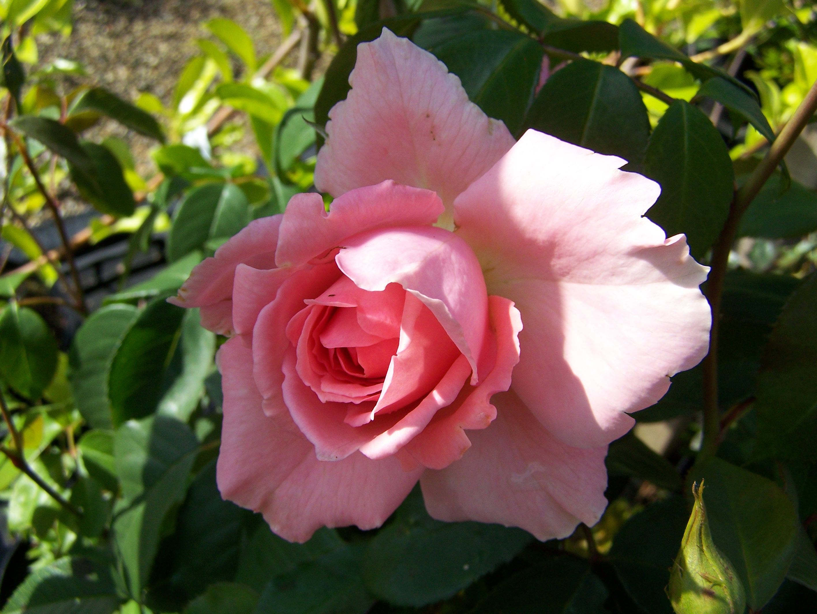 RosaS Beauty